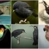 Ezt a 10 madarat már kipusztította az emberiség