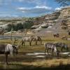 10 kihalt állat – párosujjú patások