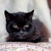 140 éves a világ legidősebb macskája