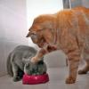 20 macskás kép, amitől jó kedved lesz