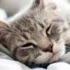 17 tény a macskákról, amiért csak még jobban imádjuk őket