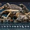19 fontos első az állatok közt - I. rész