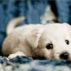 28 dolog, amit nem tudtál a kutyákról