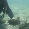 3000 éves városra bukkantak az Adria mélyén