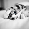 5 ok, amiért érdemes macskát tartanod