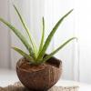 7 növény, amely segít megtisztítani a szobádban a levegőt
