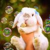A boltokat ellepték a húsvéti dekorációk, mi is hoztunk nektek egy kis cukiságot