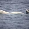 A Greenpeace újabb videóval sokkol
