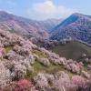 A virágba borult Kínánál szebbet ma már biztosan nem látsz!