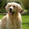 Állati ösztönök — 5 dolog, amit a kutyák kiszagolnak