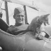 Állatok, akik háborúba mentek