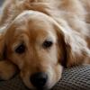 Az állatok is gyászolnak — hogyan segíthetsz nekik?