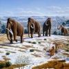 Az ember okozta a pleisztocén megafauna kihalását