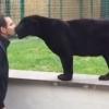 Lesből támad a puszira vadászó fekete párduc – videó