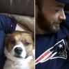 Chris Evans szerint mindenkinek adoptálnia kellene egy kutyát