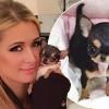 Egy vagyont költött legújabb házi kedvencére Paris Hilton