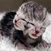 Elhunyt a kétarcú kiscica