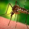 Hogyan ne legyél szúnyogmágnes