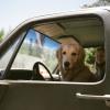 Ilyen aranyos kutyussal kocsikázott Joe Jonas és Sophie Turner