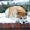 Íme a filmvilág öt leghíresebb kutyája