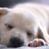 Íme, álmaink kutyusa!