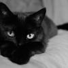 Kedvenceink a történelemben és napjainkban — a macskák