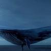 Kék Bálna – Mi is ez a jelenség?