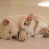 Kiderült, miről álmodnak a kutyák