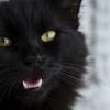 Kidobná meleg macskáját a homofób gazda