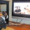 Kutyáknak szóló tévécsatorna indul