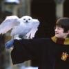 Magukra hagyják baglyaikat a Harry Potter-rajongók