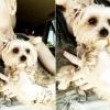 Meghalt Miley Cyrus szeretett kiskutyája