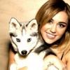 Miley Cyrus modellkedni vitte a kutyáit