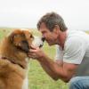 Óriási botrány! Állatkínzás miatt nyomoznak az Egy kutya négy élete című film forgatása körül