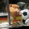 Paul polip ismét Spanyol győzelmet jósol