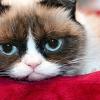 Saját filmet kap Grumpy Cat!