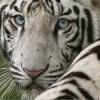 Tragédiával végződött az állatkerti kirándulás