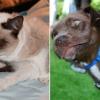 Tüsszentő állatok az internet új szenzációi