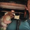Új családtag! Édes kutyussal tért haza Shawn Mendes és Camila Cabello
