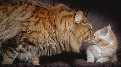 10 elképesztően óriási állat, amitől garantáltan megijedsz II.