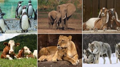 11 érdekes tény az állatokról, amikről el sem hiszed, hogy igazak