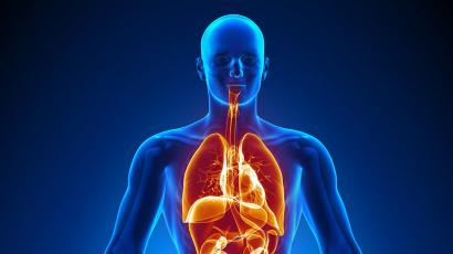 20 érdekes tény az emberi testről