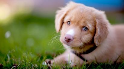 19 meggyőző érv, hogy miért csodálatos kutyával élni