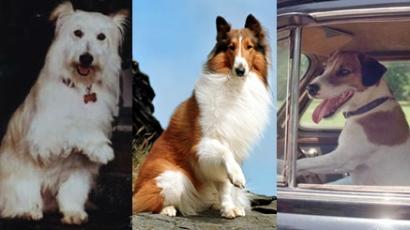 Állatok filmsztárokként II.