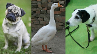 Állatok filmsztárokként VII.