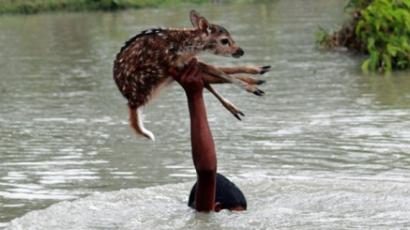 Bátor tinédzser őzgidát mentett a folyóból