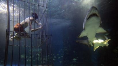 Cápákkal úszott Varga Viktor