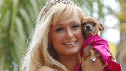 Elhunyt Paris Hilton kutyája