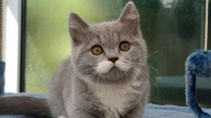 Ez a cica az internet új sztárja