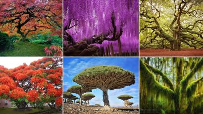 Ezek a világ legkülönlegesebb fái